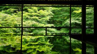 京都・瑠璃光院|春の特別拝観