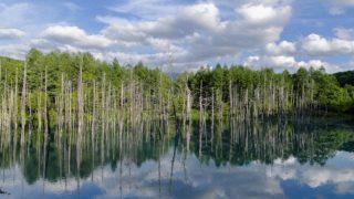 夏の北海道旅行おすすめプラン 青い池