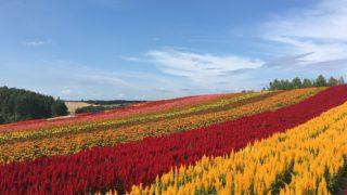 夏の北海道旅行おすすめスポット|美瑛