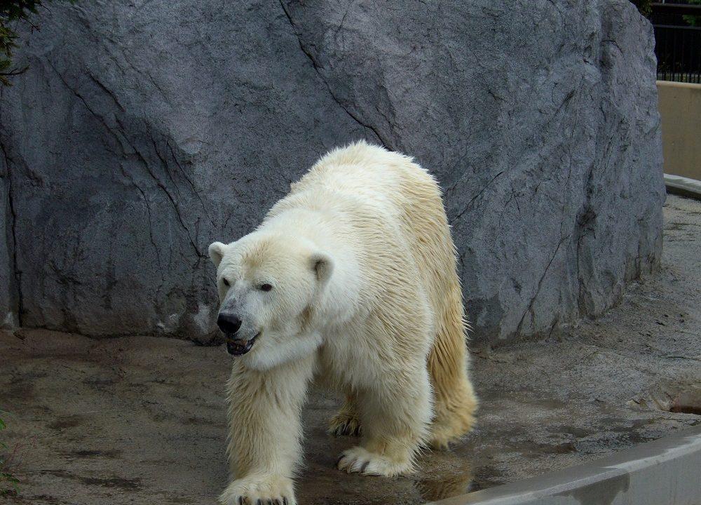 夏の北海道旅行おすすめスポット 旭山動物園