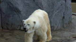 夏の北海道旅行おすすめスポット|旭山動物園