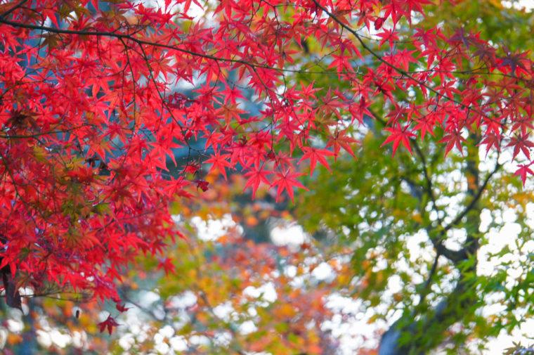 京都のおすすめ紅葉鑑賞コース