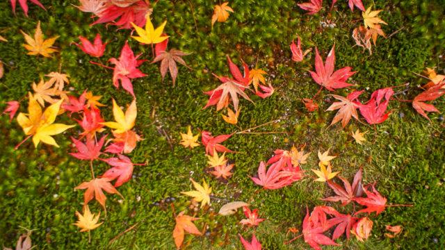京都「南禅寺の紅葉」