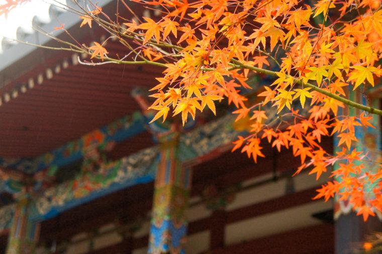 京都「永観堂の紅葉」