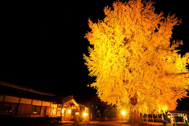 和歌山「丹生酒殿神社の紅葉」
