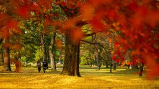 京都御苑と下鴨神社の紅葉