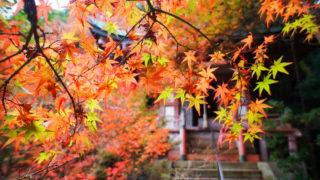 京都|毘沙門堂の紅葉