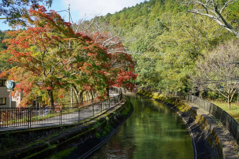 琵琶湖疏水の紅葉