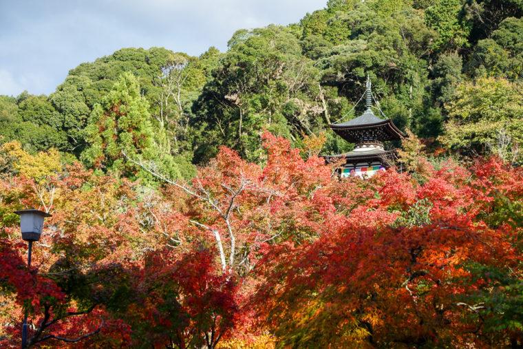 京都・永観堂の紅葉