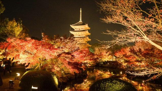 京都・東寺の紅葉ライトアップ