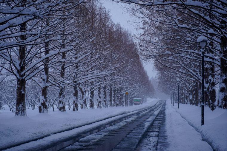 滋賀マキノ町「冬のメタセコイア並木道」