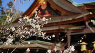 京都「北野天満宮の梅」