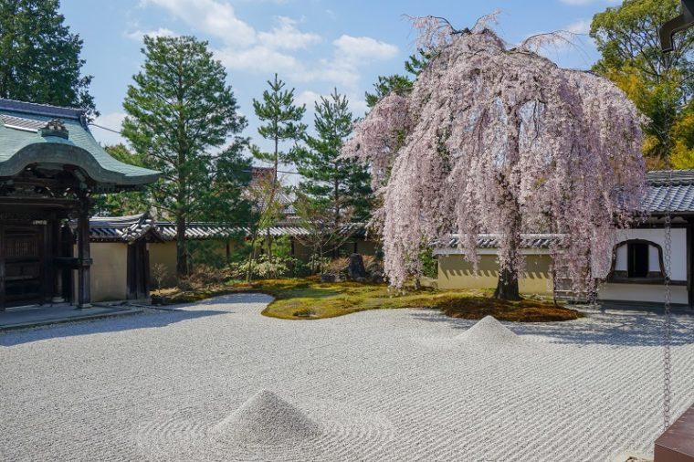 京都の桜名所・東山エリア「高台寺」