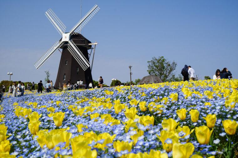 関西のおすすめチューリップ畑9選|見頃時期、開花状況、アクセス|花博記念公園鶴見緑地