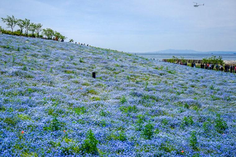 大阪のおすすめ絶景スポット|大阪まいしまシーサイドパーク