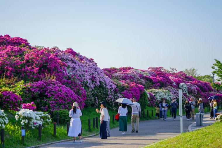 関西でおすすめのツツジの名所|浅香山浄水場のツツジ