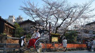 京都の桜スポットまとめ