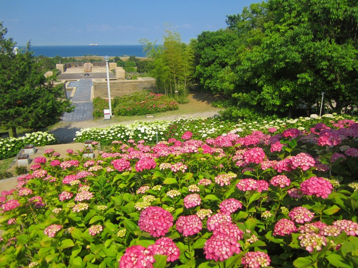 関西のおすすめ紫陽花(あじさい)名所「淡路島国営明石海峡公園」