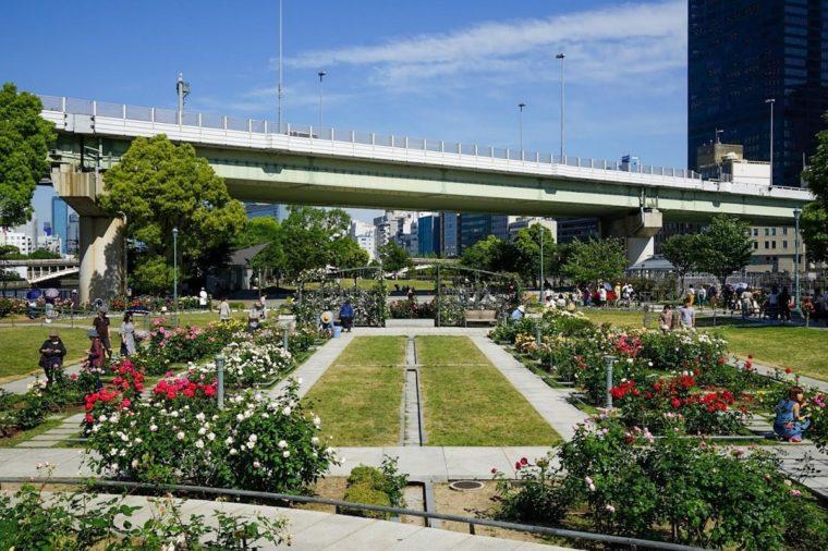 大阪のバラ園「中之島公園 バラ園」|見頃・開花情報、アクセスを紹介