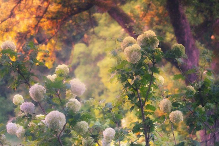 【2020年版】関西でおすすめの紫陽花(あじさい)名所8選|見頃・開花情報・アクセスまとめ