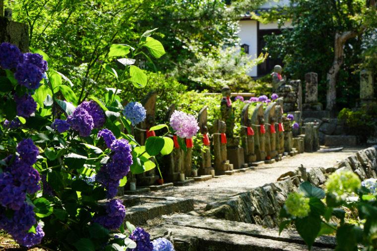 【2019年版】奈良のあじさい寺「矢田寺」|見頃・開花情報、アクセスを紹介