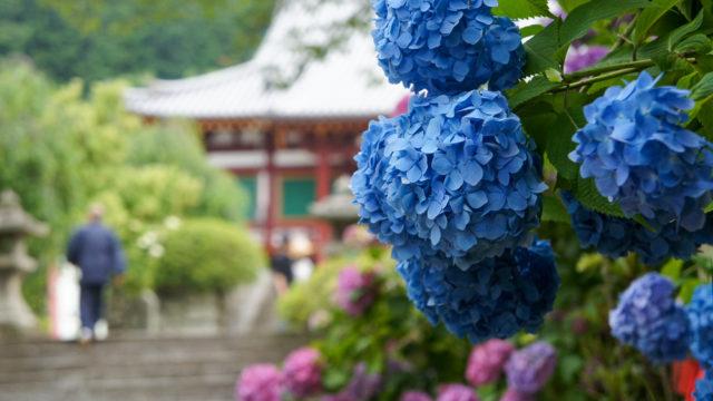 矢田寺とあじさい園