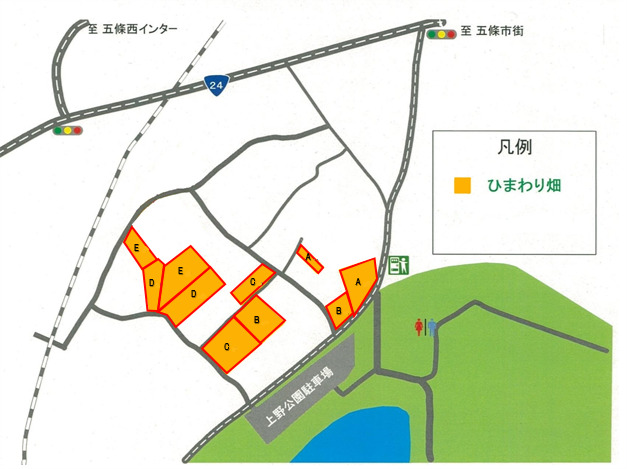 五條市上野町ひまわり園