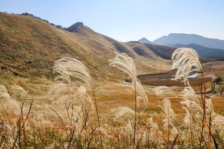 関西・奈良のススキの名所「曽爾高原」