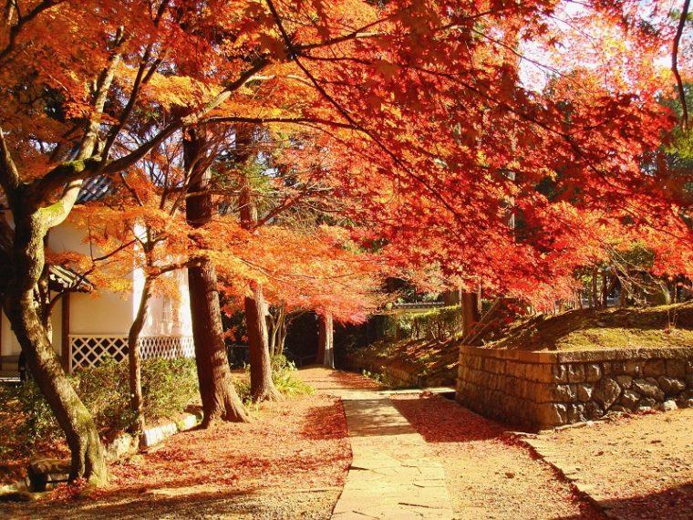 関西・京都のおすすめ紅葉スポット「光明寺」