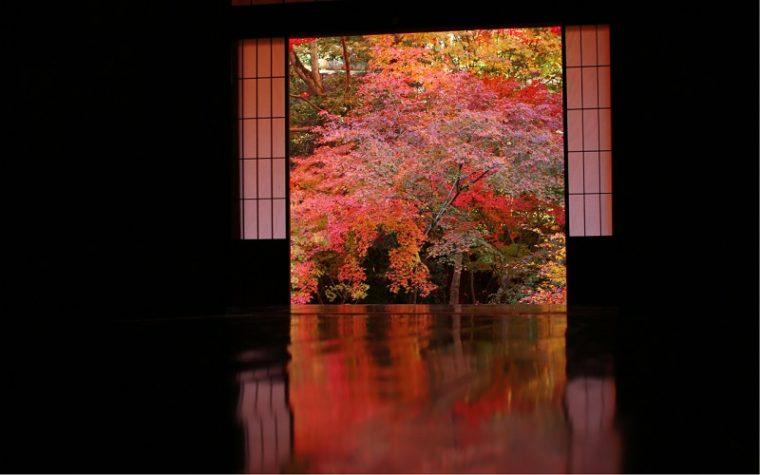 関西・京都のおすすめ紅葉スポット「実相院門跡」