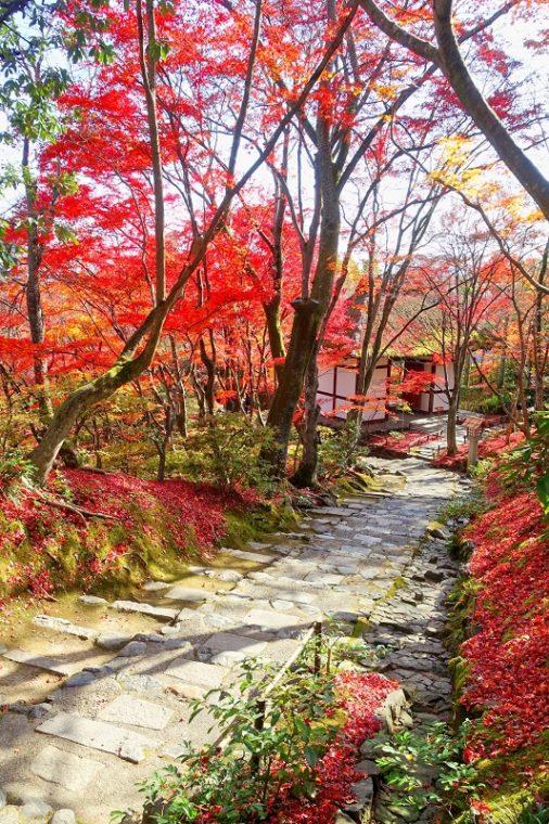 関西・京都のおすすめ紅葉スポット「常寂光寺」