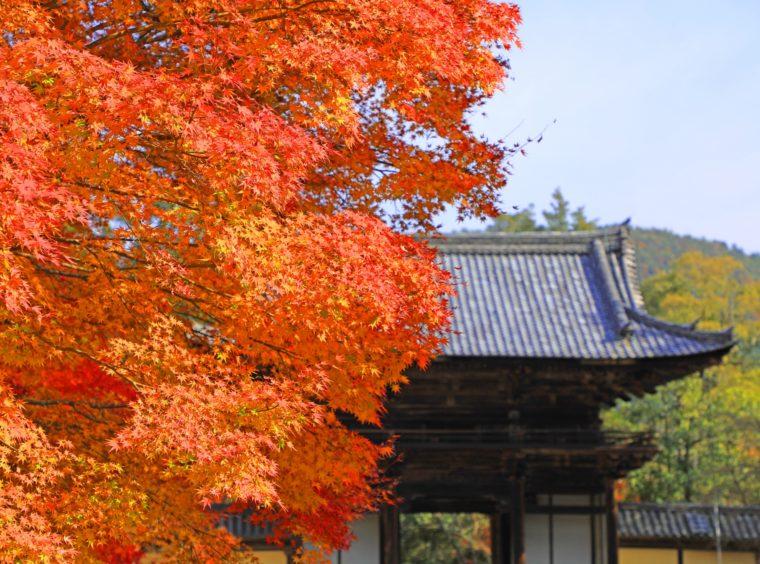 関西・京都のおすすめ紅葉スポット「神護寺」