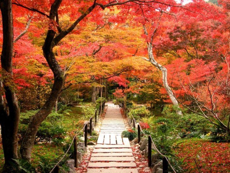 関西・京都のおすすめ紅葉スポット「宝筐院」