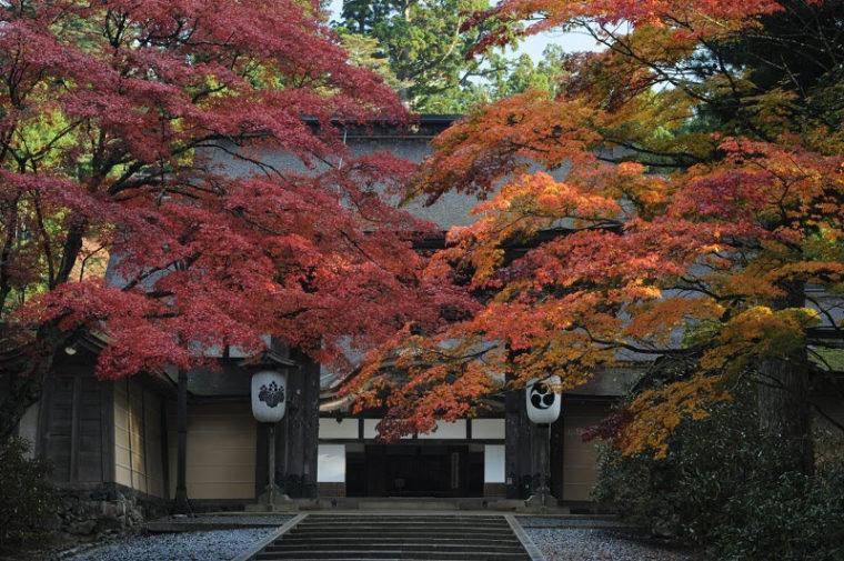 関西・和歌山のおすすめ紅葉スポット「高野山」
