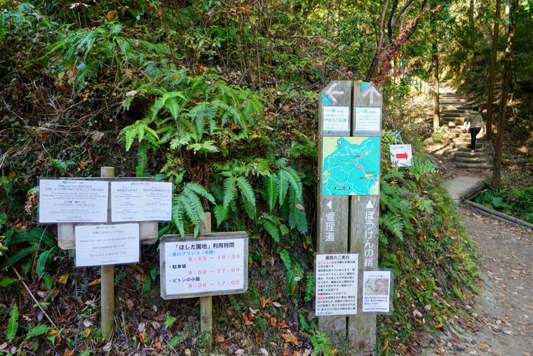 大阪の絶景紅葉スポット「ほしだ園地・星のブランコ」