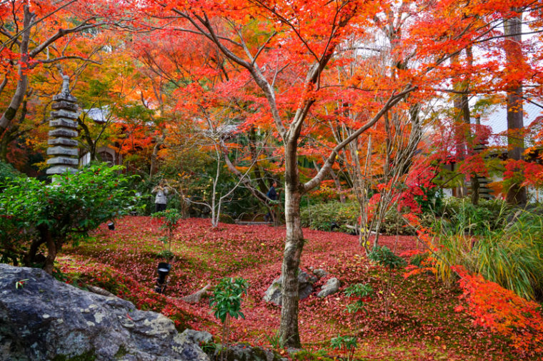 京都・嵐山の紅葉スポット「宝厳院」