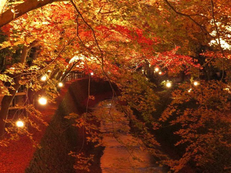 関西・京都のおすすめ紅葉スポット「北野天満宮」