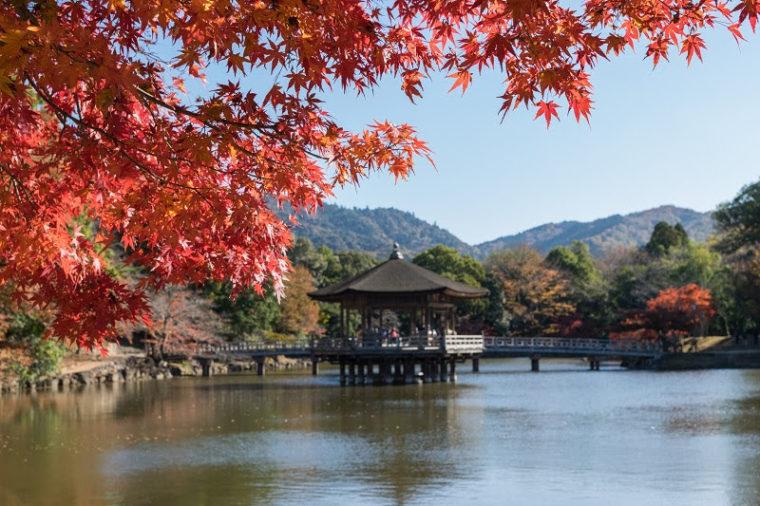関西・奈良のおすすめ紅葉スポット「奈良公園」