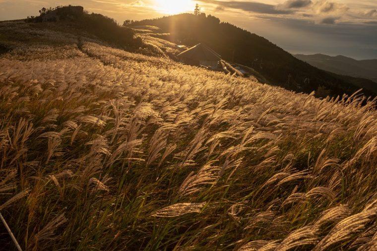 関西・和歌山のススキの名所「生石高原」