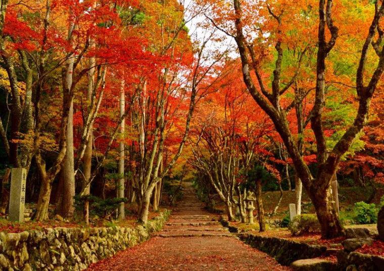 関西・滋賀のおすすめ紅葉スポット「鶏足寺」