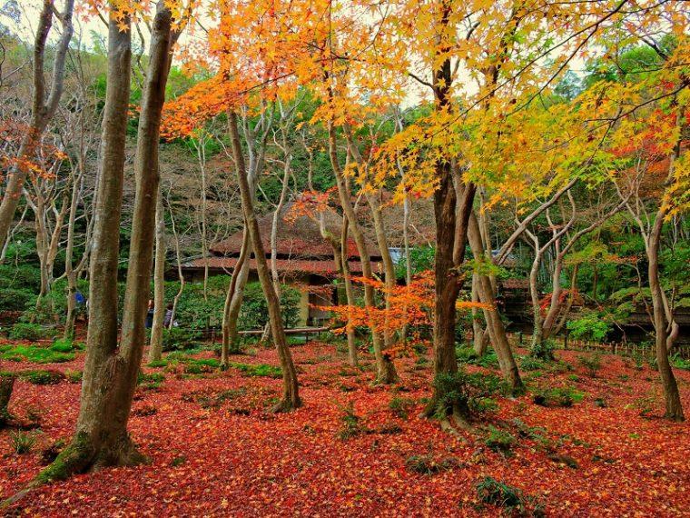 関西・京都のおすすめ紅葉スポット「祇王寺」