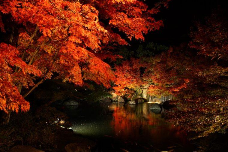 兵庫のおすすめ紅葉スポット「姫路城・好古園」