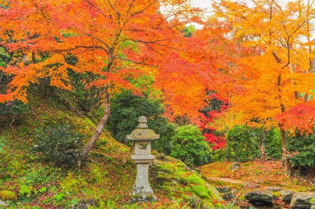 関西・京都のおすすめ紅葉スポット「瑠璃光院」