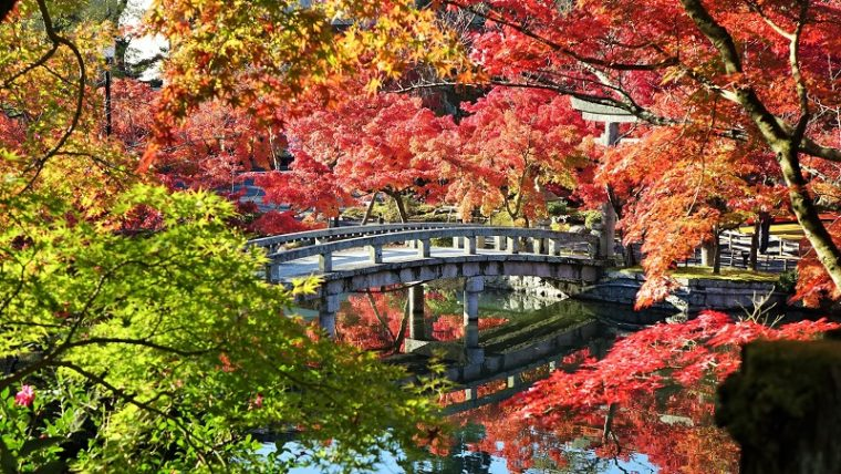 京都のおすすめ紅葉スポット「永観堂(禅林寺)」