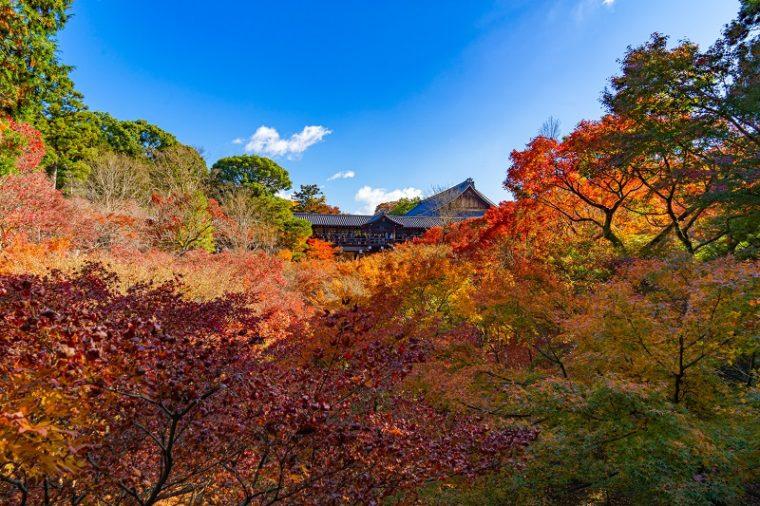 京都のおすすめ絶景スポット「東福寺の紅葉」