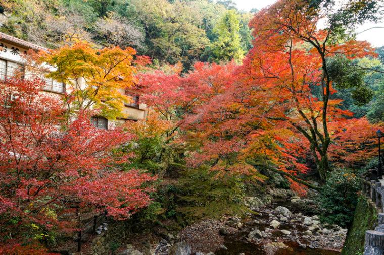 関西・大阪のおすすめ紅葉スポット「箕面大滝」|箕面公園