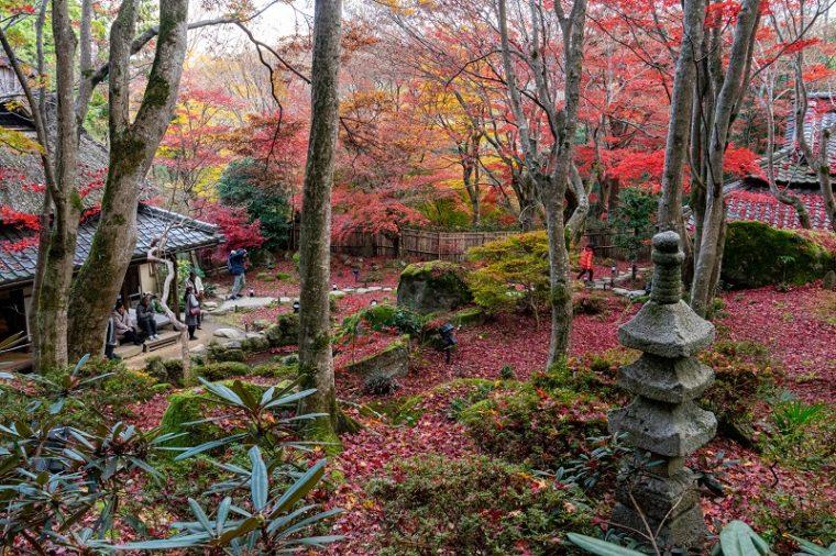 石の寺 教林坊の紅葉