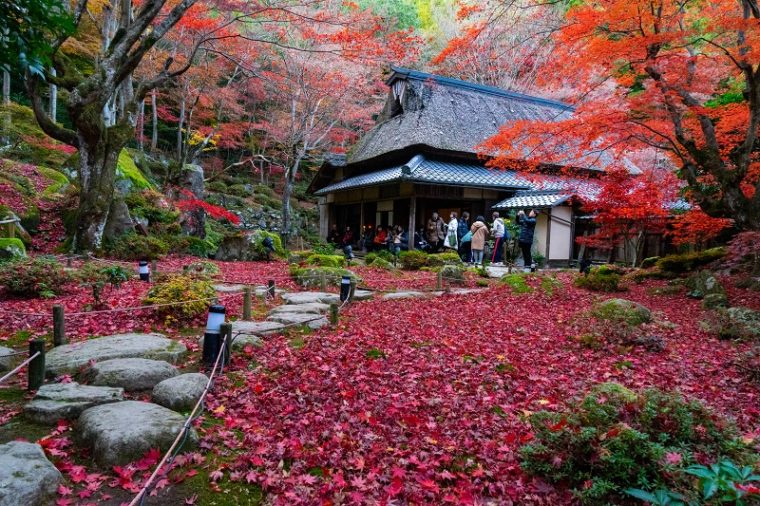 「石の寺 教林坊」の紅葉