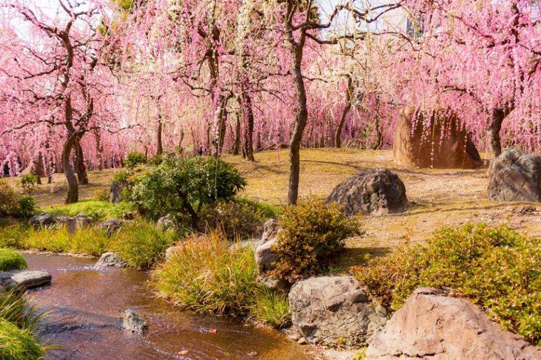関西でおすすめの梅の名所 城南宮 神苑