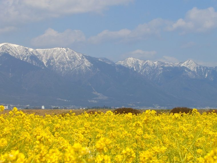 滋賀の早咲き菜の花畑「第1なぎさ公園」